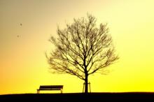 夕焼けの木